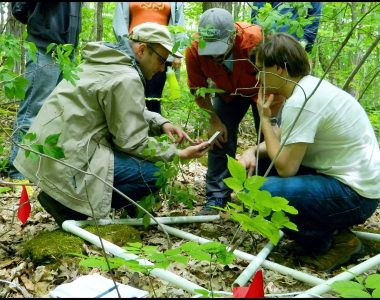 Plant Biodiversity Modeling