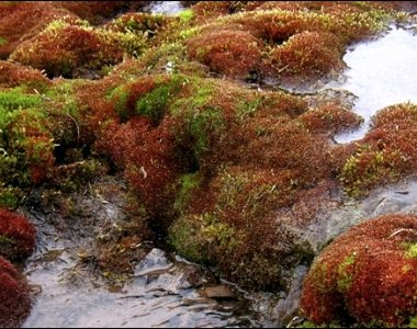 Impacts to Ecosystem Services From Aquatic Acidification