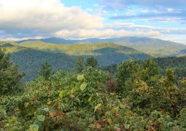Sustainable Timber Harvesting on the Daniel Boone National Forest